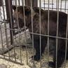 Помощь Животным on Instagram ‼️🆘‼️ мишкиПокровск ‼️ Что мы можем сделать 🐻🦁Мы можем написать заявление о плохом содержании животных Чем больш