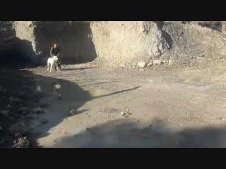 tr kangal