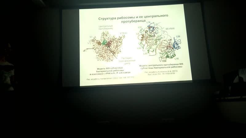 Радмира Фомина Влияние нокаута гена рибосомного белка L33 на ростовые характеристики клеток Escherichia coli и свойства их рибо