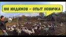 Индюки разведение ПРОЕКТ 100 ИНДЮКОВ