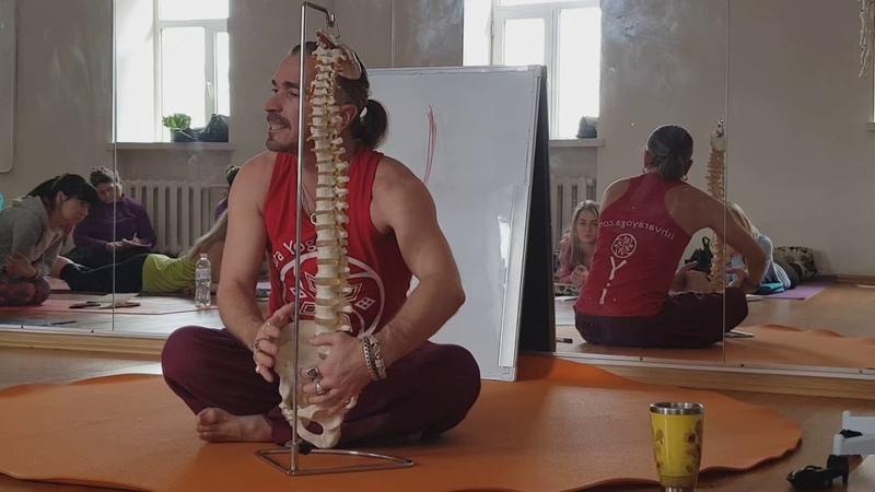 подвздошно поясничная мышца. Подробный разбор. Анатолий Зенченко