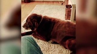 Собака пердит, кот блюёт!