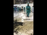 #Black Crickets Invade Meccas Grand Mosque
