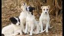 Мужчина увидел 4 псов которые охраняли одеяло Подойдя ближе он ахнул от удивления