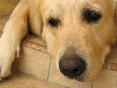Urmas alender- hüvasti kollane koer
