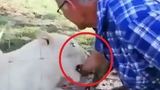 Man almost has his arm ripped off by a lioness while trying to pet it in South Africa