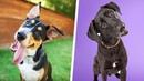 Warum neigen Hunde den Kopf?
