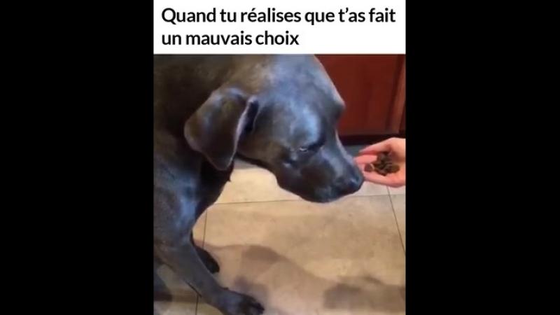 Ipnoze - Un chien choisit de la nourriture dans la mauvaise main