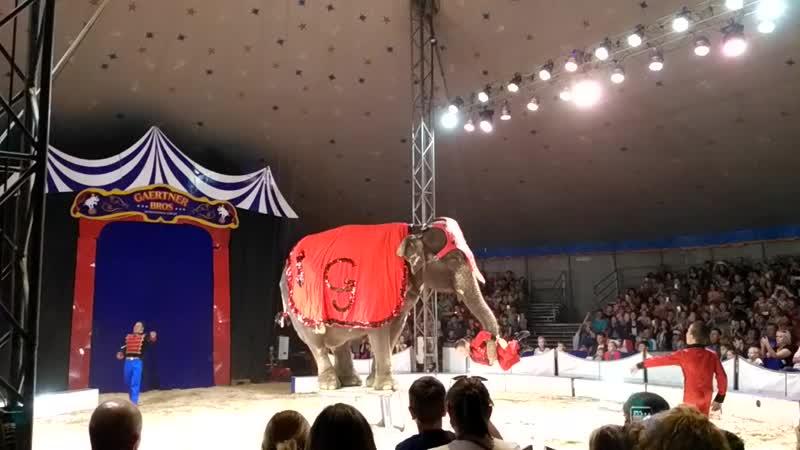 слоник 2