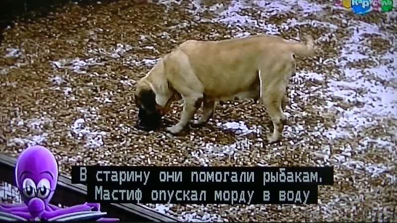 Детство Ратибора (6) Василиса Микулишна Василиса Микулишна (6) Последняя невеста Змея Горыныча