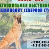 Выставка собак в СПб, Чемпионат России