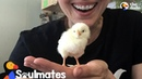 Woman Falls In Love With Chicken Rescued From NYC Streets | The Dodo Soulmates