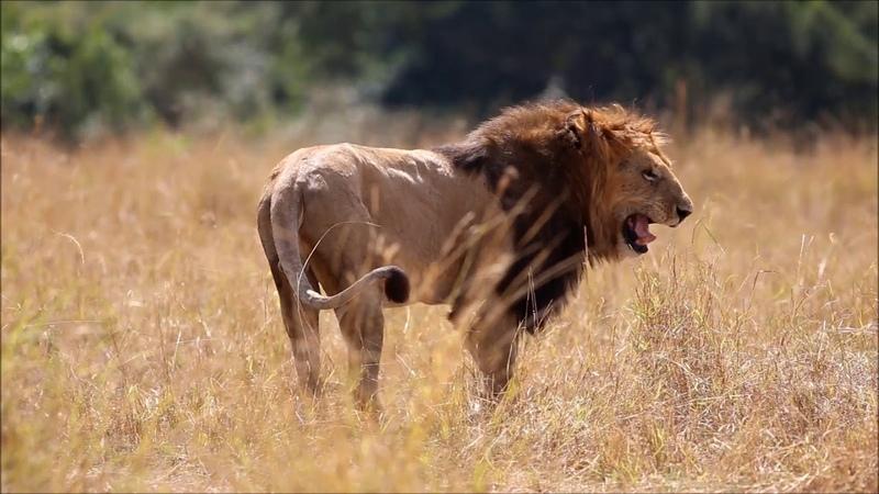 Kenya Tanzania Safari - Features Africa Journeys