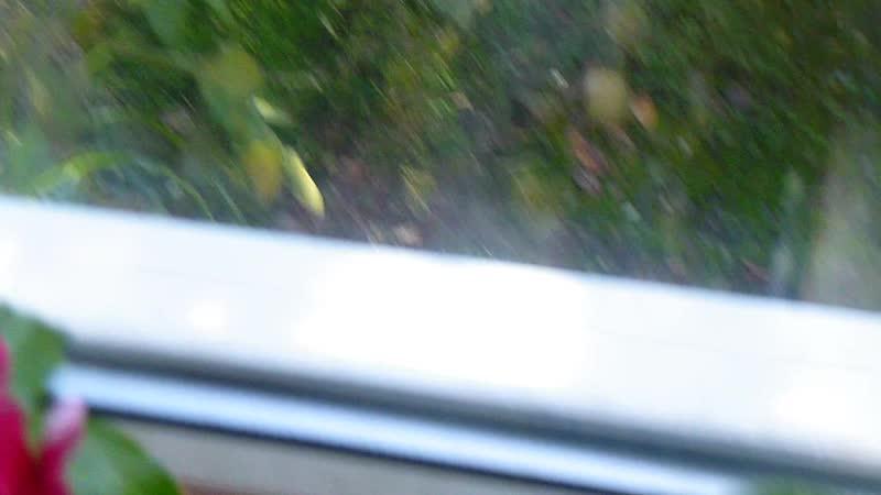 Сухум абхазия 10 января вид из окна