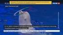 Новости на Россия 24 • Директор Приморского океанариума ушел в отставку после смерти дельфина