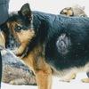 Помощь дяде Вове и его собакам