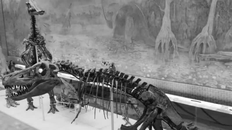 РепкаКлаб - палеонтологическая экспедиция (Раскопки)