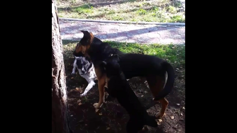 не бросайте собак в садах!
