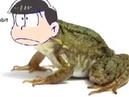 Screaming frogs but it's Choromatsu