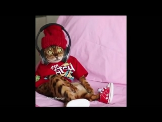 Котик на волне Хит FM.