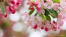 Сборник красивых песен Весеннее настроение
