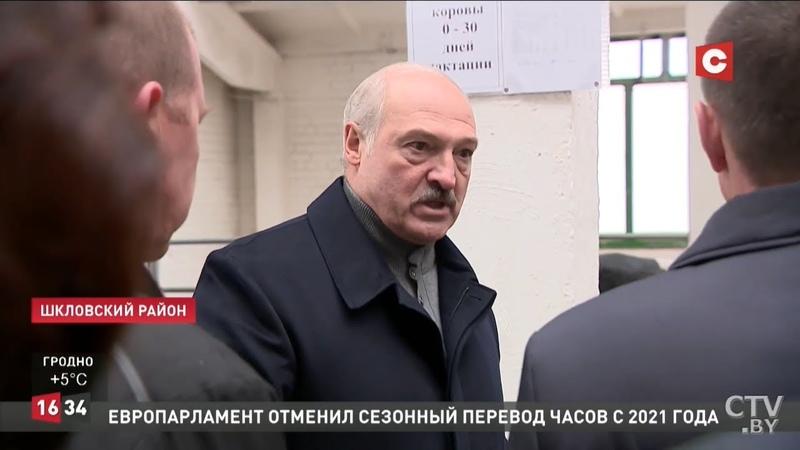 Лукашенко Это Освенцим Виновных в СИЗО Президент возмущен содержанием коров в Шкловском районе
