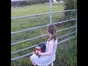 Коровы слушают гармошку