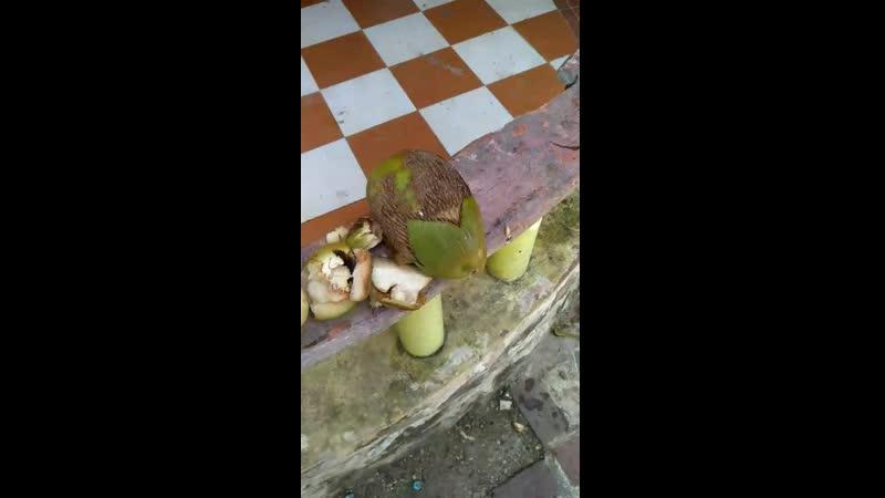 нарубил кокосов на обед