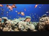 4K Coral Reef Aquarium _ Relaxing Music for Sleep, Study, Meditation Yoga Sc