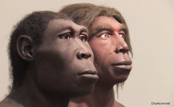 Современные исследования о происхождении человека выявило многообразие человеческих папилломавирусов, которые прошли сложный процесс эволюции. На данный момент известно 27 видов вируса папилломы