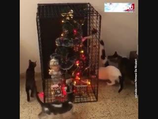 Ох уж эти коты и кошки. До Нового года осталось всего 10 дней!