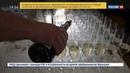 Новости на Россия 24 • По российским винам составили гид-путеводитель