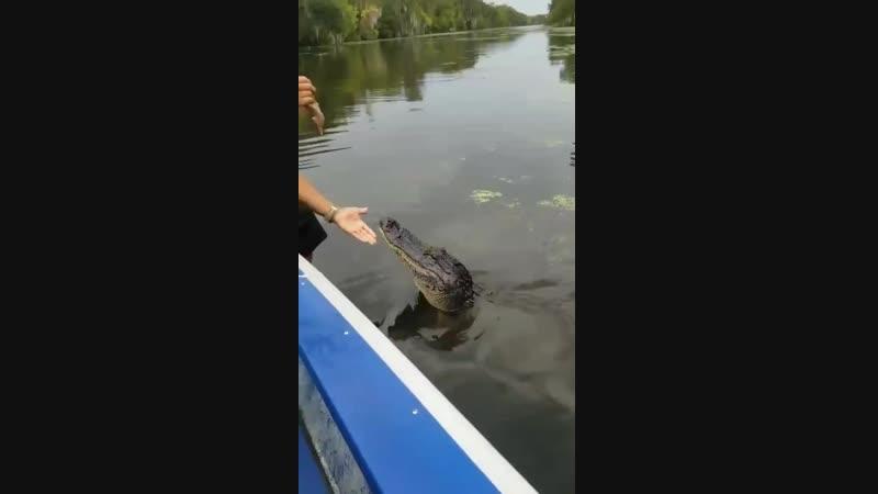 Хорошей пёсик... - croc awesome animals