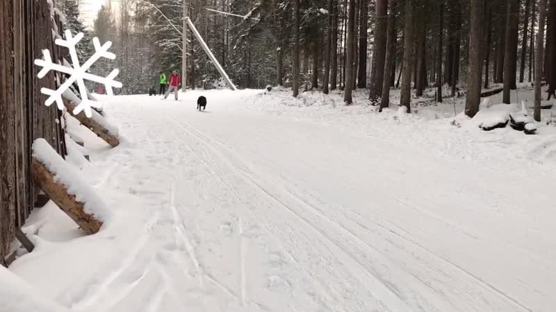 Сыктывкарец-значит лыжник.