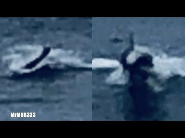 Человекоподобное существо показалось из воды в Калифорнии