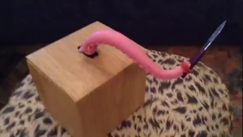 Knife winding tentacle
