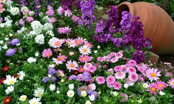 Цветочные смеси для клумб и газонов Не каждый цветовод обладает богатой фантазией, свободным временем и крепким здоровьем, чтобы устроить у себя в цветнике ботанический парк! А ведь мимо