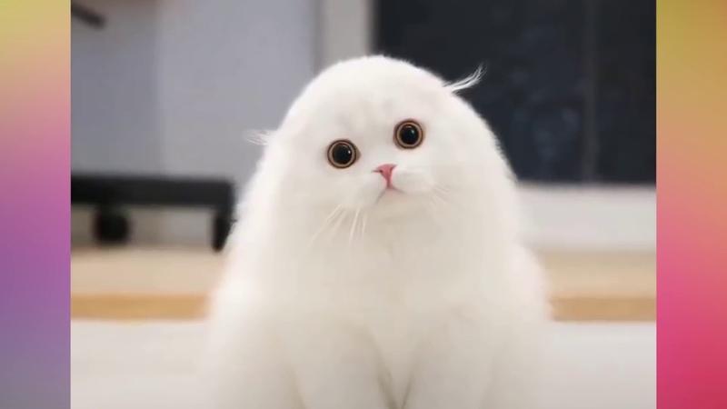Забавные Котята - 😸 Самые милые котики! 🐈 - Смешные коты и котята