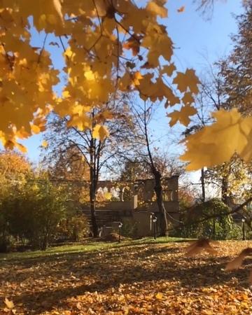 """""""Осень. Листья. Ив Монтан"""""""
