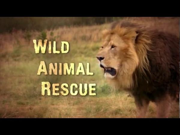 Спасение диких животных 2 серия