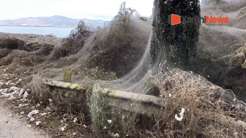 Ιστός αράχνης 1000 μέτρα στην λίμνη Βιστωνίδα