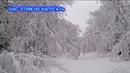 Аномальный снегопад Деревья ломало как спички