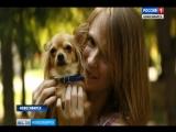 Благотворительная фотосессия с собаками пройдет завтра в Первомайском сквере