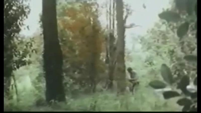 Amori morbosi di una contessina Болезненная любовь одной графини 1977