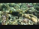 Красное море 4