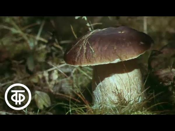 Грибная охота Полезная информация для грибников 1990