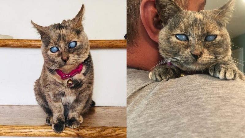🔴 Слепого котенка подбросили к приюту в картонной коробке.Позже выяснилось,что он вовсе не слепой !