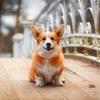 Догвилль - город собак