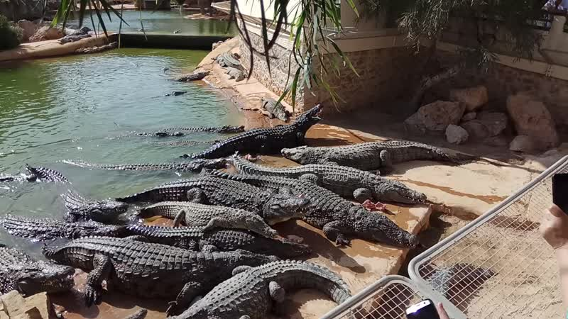 Крокодилья ферма. Остров Джерба. 27.05.2018.