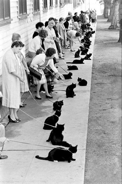 Кастинг на главную роль в голливудском фильме ужасов «Призрак кота», 1961 год.